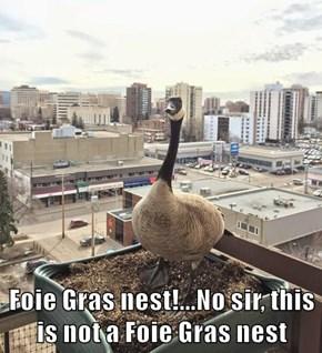 Foie Gras nest!...No sir, this is not a Foie Gras nest