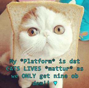 My *Platform* is dat CATS LIVES *mattur* as we ONLY get nine ob dem!! ♥