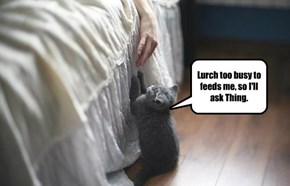 Addams Family Pets.