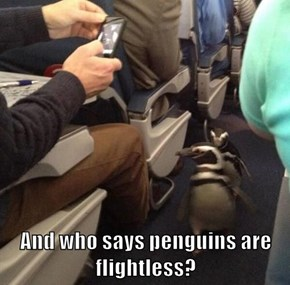 And who says penguins are flightless?