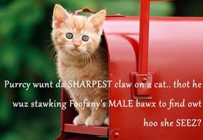 Purrcy wunt da SHARPEST claw on a cat.. thot he wuz stawking Foofany's MALE bawx to find owt hoo she SEEZ?