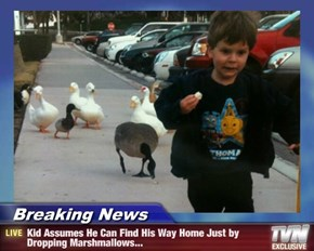 Breaking News - Kid Assumes He Can Find His Way Home Just by Dropping Marshmallows...