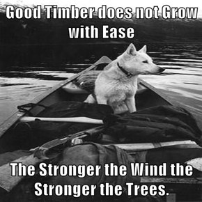 Good Timber does not Grow with Ease  The Stronger the Wind the Stronger the Trees.