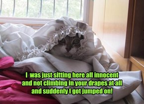 I  was just sitting here all innocent and not climbing in your drapes at all and suddenly I got jumped on!