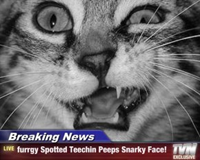 Breaking News - furrgy Spotted Teechin Peeps Snarky Face!