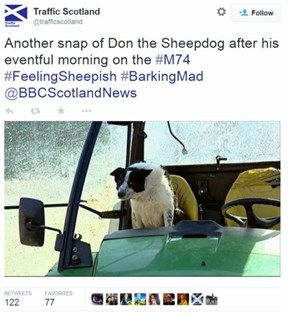 A Dog in Scotland Took a Tractor for a Joyride. His Face Says it All.