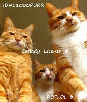 ID#11000PURR  Catlady  License  ♥                  ROFLOL ☻
