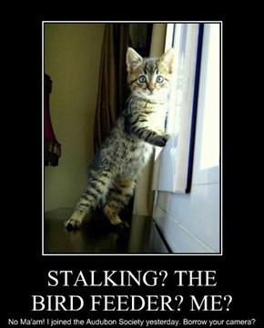 STALKING? THE BIRD FEEDER? ME?