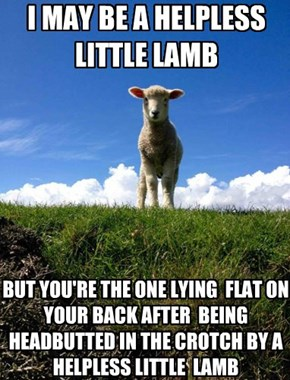 I MAY BE A HELPLESS  LITTLE LAMB