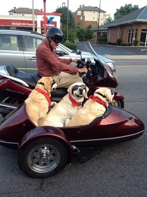 Dogs are My Copilots
