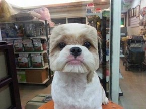 There's A New Trend in Taiwan For Giving Dogs Perfectly Square Haircuts