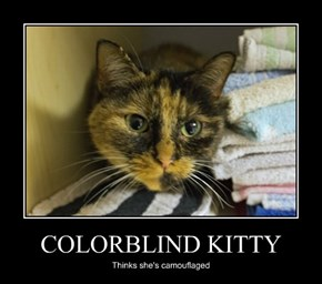 COLORBLIND KITTY