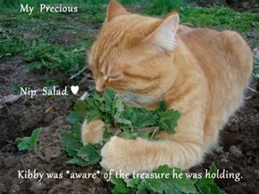 My  Precious       Nip  Salad ♥ Kibby was *aware* of the treasure he was holding.