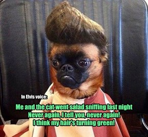 Me and the cat went salad sniffing last night Never again, I tell you, never again!  I think my hair's turning green!