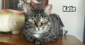 Allcats' kitteh Katie
