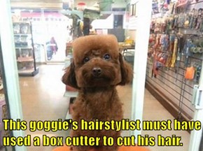 This goggie's hairstylist must have used a box cutter to cut his hair.