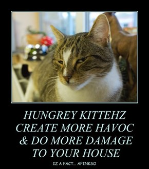 HUNGREY KITTEHZ CREATE MORE HAVOC  & DO MORE DAMAGE  TO YOUR HOUSE