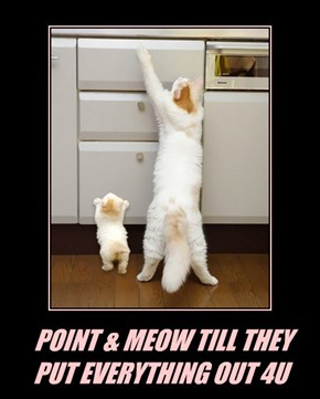 POINT & MEOW TILL THEY PUT EVERYTHING OUT 4U