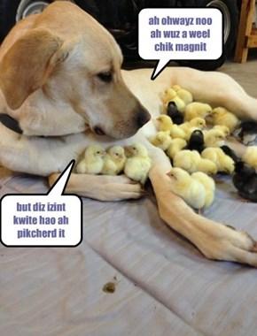ah ohwayz noo ah wuz a weel chik magnit