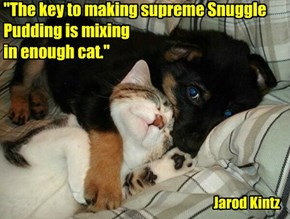 """""""The key to making supreme Snuggle Pudding is mixing  in enough cat."""""""