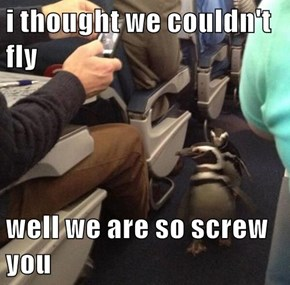 They Probably Don't Have Many Frequent Flyer Miles Though