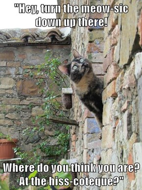 """""""Hey, turn the meow-sic down up there!  Where do you think you are? At the hiss-coteque?"""""""