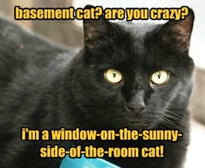 basement cat? are you crazy?       i'm a window-on-the-sunny-side-of-the-room cat!