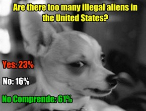 Are there too many illegal aliens in the United States?