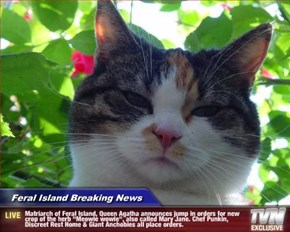 """Feral Island Breaking News - Matriarch of Feral Island, Queen Agatha announces jump in orders for new crop of the herb """"Meowie wowie"""", also called Mary Jane. Chef Punkin, Discreet Rest Home & Giant Anchobies all place orders."""
