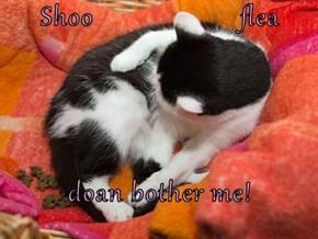 Shoo                     flea  doan bother me!