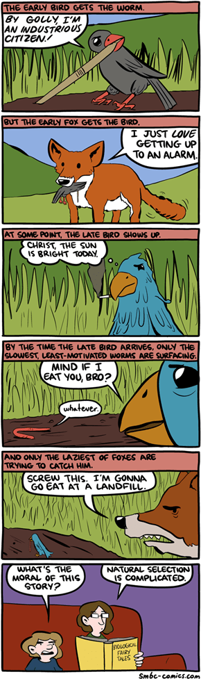 About the early and late birds
