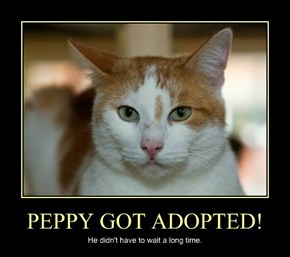 PEPPY GOT ADOPTED!