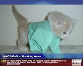 """KKPS Medical Breaking News - Dr Tinycat sez he will be using teh """"Meowie wowie"""" wonder herb in his practice at teh Discreet Rest Home! KKPS Fakulty applaud teh annownsement!"""