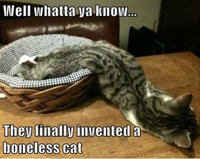 Well whatta ya know...  They finally invented a boneless cat