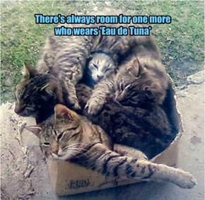 There's always room for one more  who wears 'Eau de Tuna'