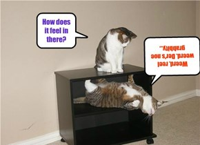 Schrodinger's Cat's Cupboard, Much More Feline Friendly  Than Schrodinger's Experiment