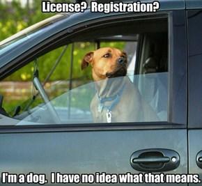 License?  Registration?