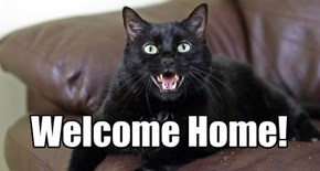 Welcoming Committeh Kitteh