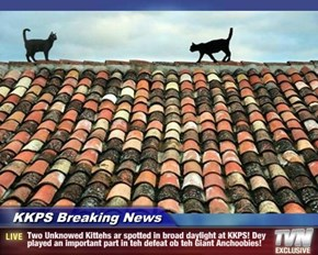 KKPS Breaking News - Two Unknowed Kittehs ar spotted in broad daylight at KKPS! Dey played an important part in teh defeat ob teh Giant Anchoobies!