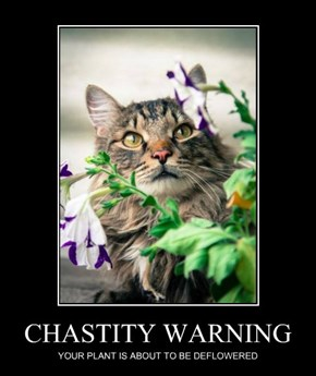 CHASTITY WARNING
