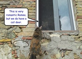 This is very romantic Romeo, but we do have a cat door.