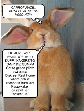 PRESS CONFERENCE BY BOZZ BUNWICK CEO/Bunnway Airlines: The Official Less Than Thrilled Air Transport of Kuppykakes Skool & Kamp