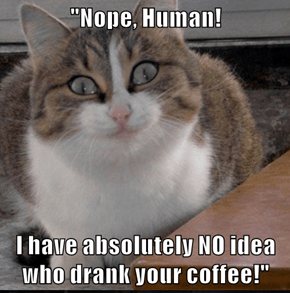 """Nope, Human!  I have absolutely NO idea who drank your coffee!"""