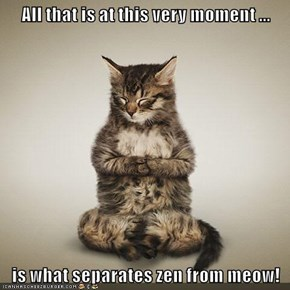 All that is at this very moment ...  is what separates zen from meow!