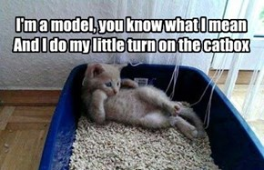 I'm a model, you know what I mean And I do my little turn on the catbox