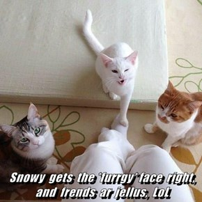 Snowy  gets  the *furrgy* face  right, and  frends  ar  jellus,  LoL