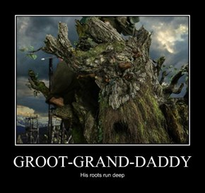 GROOT-GRAND-DADDY