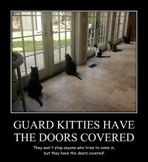 GUARD KITTIES HAVE THE DOORS COVERED