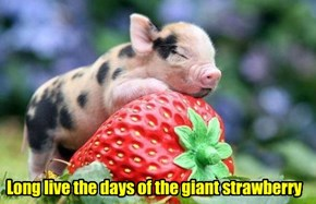 Long live the days of the giant strawberry