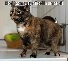 No, I haz nawt walked in ur tar pit
